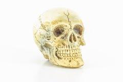 Cráneo en blanco Fotografía de archivo libre de regalías
