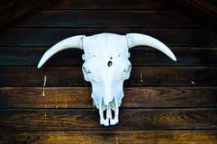 Cráneo en color Fotografía de archivo