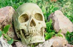 Cráneo en el jardín Imágenes de archivo libres de regalías
