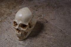 Cráneo en imagen sucia del piso Imagenes de archivo