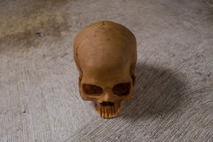 Cráneo en imagen sucia del piso Fotos de archivo