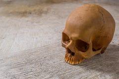 Cráneo en imagen sucia del piso Foto de archivo