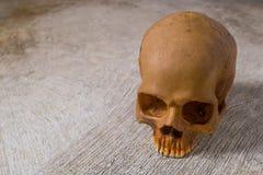 Cráneo en imagen sucia del piso Imagen de archivo
