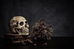 Cráneo en la tabla, aún vida Foto de archivo