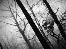 Cráneo en las maderas Imagen de archivo libre de regalías