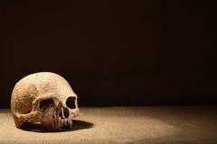 Cráneo en oscuridad Foto de archivo libre de regalías