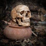 Cráneo en parque Foto de archivo