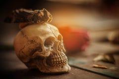 Cráneo en piso de madera Foto de archivo