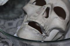 Cráneo en un cuenco Imagen de archivo libre de regalías