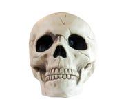 Cráneo en un fondo blanco Fotos de archivo libres de regalías