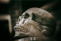 Cráneo en una tabla foto de archivo