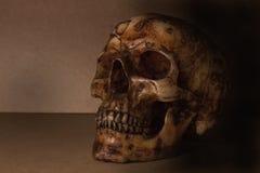 Cráneo en vieja todavía de madera vida Foto de archivo