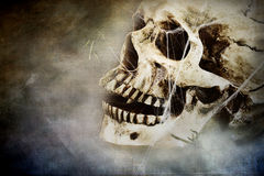 Cráneo espeluznante fotografía de archivo