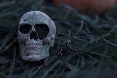 Cráneo esquelético asustadizo que se sienta en heno y paja en una tarde fría de la caída fotos de archivo
