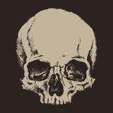 Cráneo Estilo del grabado Ilustración del vector Imagen de archivo