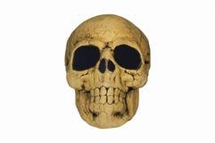 Cráneo fantasmagórico Imágenes de archivo libres de regalías