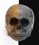 Cráneo, fondo blanco y negro Imagen de archivo libre de regalías