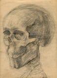 Cráneo - gráfico de la mano Imagen de archivo