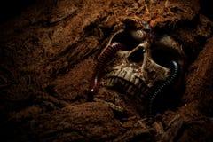 Cráneo gritador Fotografía de archivo libre de regalías