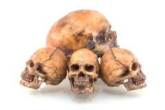 Cráneo humano fotografía de archivo libre de regalías