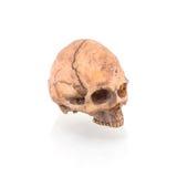 Cráneo humano imagen de archivo