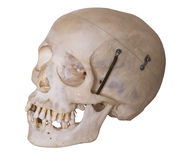 Cráneo humano con el camino de recortes foto de archivo libre de regalías