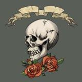 Cráneo humano con las rosas stock de ilustración