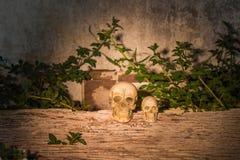 Cráneo humano (cráneo) en la madera Fotografía de archivo libre de regalías
