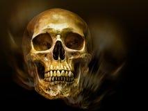 Cráneo humano de oro Imágenes de archivo libres de regalías