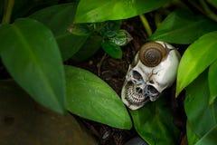 Cráneo humano en el bosque con los caracoles Imágenes de archivo libres de regalías