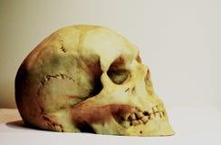 Cráneo humano en el fondo blanco Imágenes de archivo libres de regalías