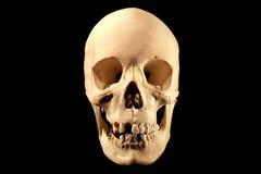 Cráneo humano en negro imagen de archivo libre de regalías