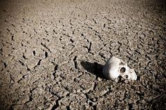 Cráneo humano en pista seca Fotos de archivo libres de regalías