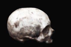 Cráneo humano real en un fondo negro aislado Imagen de archivo