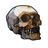 Cráneo humano viejo del esquema abstracto Imágenes de archivo libres de regalías