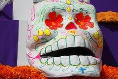 Cráneo III del color Fotografía de archivo