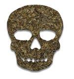 Cráneo llenado del tabaco Imagenes de archivo