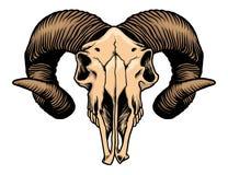 Cráneo principal de la cabra Imágenes de archivo libres de regalías