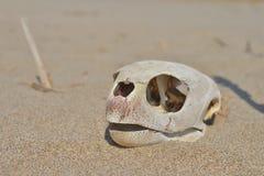 Cráneo resistido Imagenes de archivo