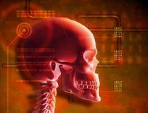 Cráneo rojo stock de ilustración