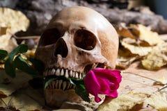 Cráneo Rose Love Imagen de archivo libre de regalías