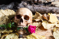 Cráneo Rose Love Fotos de archivo