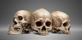Cráneo tres foto de archivo