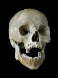 Cráneo viejo Fotografía de archivo