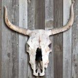 Cráneo viejo de la vaca Imágenes de archivo libres de regalías