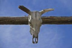 Cráneo viejo del toro delante del cielo Imagen de archivo libre de regalías