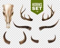Cráneo y cuernos de la vaca fijados Imágenes de archivo libres de regalías