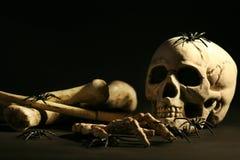 Cráneo y huesos Fotografía de archivo