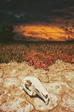 Cráneo y sequía foto de archivo libre de regalías