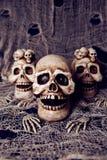 Cráneos fotos de archivo
